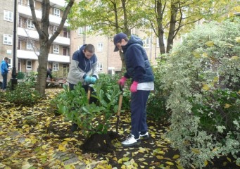Outreach Gardening Work