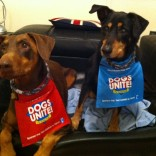 Therapy Dogs Support Dogs Unite