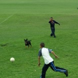Football with the dogs